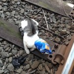 NYC Subway Motorman Saves Kitten With Head In Chips Bag From Tracks