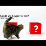 UNIQLO Lucky Cube with Maru: Famous Internet Cat Takes a Side Job