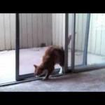 Cat Opens Sliding Door