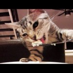 Kitty Eats With Fork