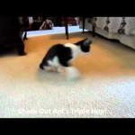Anakin Loves Da Bird: Two Legged Cat Hops Like A Bunny