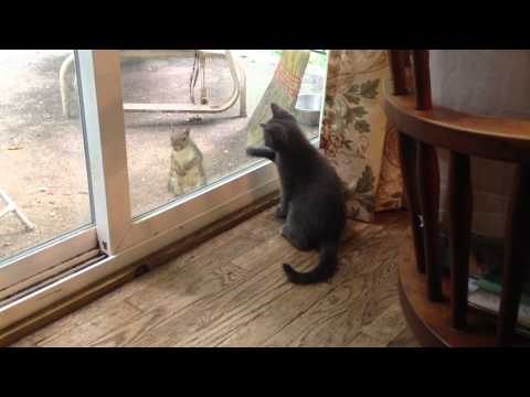 Smoky the Kitten and Mr. Squirrel