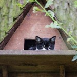 Cat and Kittens Set Up Housekeeping in Birdhouse