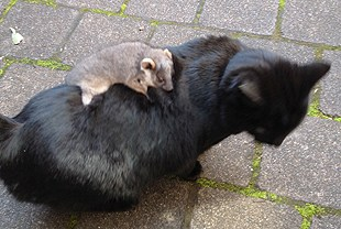 Cat Gives Possum Piggyback Ride Life With Cats