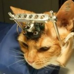 Double Trouble's Tragic Case Inspires Petition Calling For UW to Cease Experiments on Cats