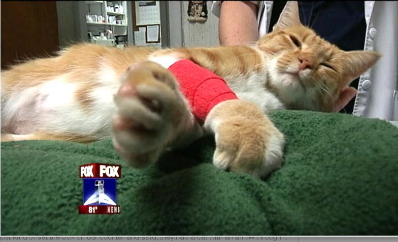 Florida Cat Shot With Arrow Draws Community Support