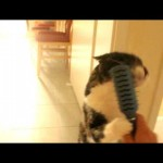 Cat Brushes Herself