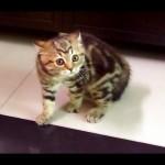 Scary Kitten Dance