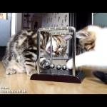 Kittens Learn Physics
