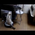 Kitty Rides the Roomba