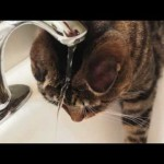 Klaus the Cat Washing His Hair and Drinking From the Sink