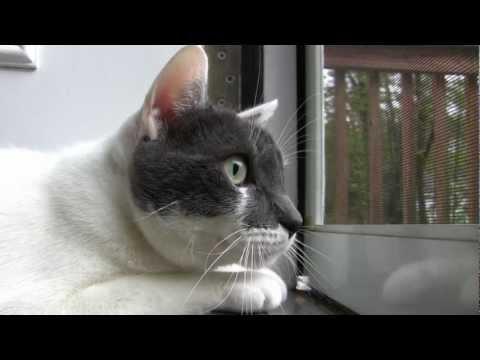 Chattering Cat Talks to Birds