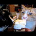 Two Kittens and an Ice Cream Cone