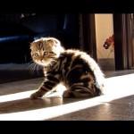 Cute Kitten Rosy