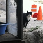 Returning to the Boardwalk: Atlantic City Cats Post-Sandy