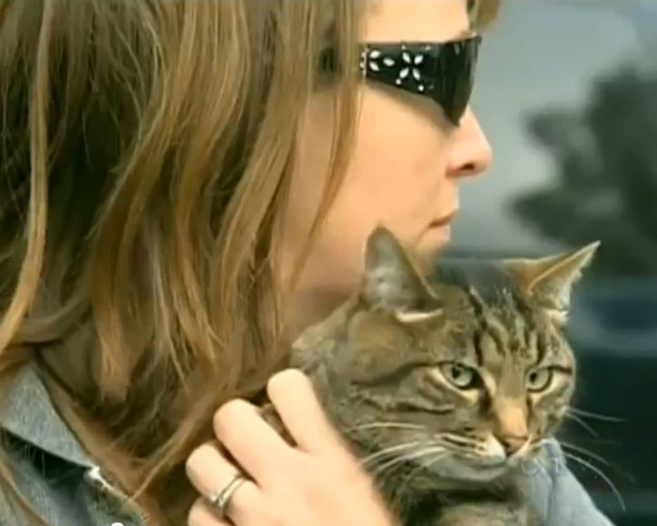Cat Returns Home Bound in Duct Tape