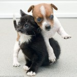 Abandoned Kitten and Puppy are Loving Friends at Shelter