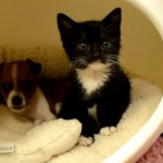 Kitty and Buttons: Adorable Bonded Kitten and Puppy Rest and Play