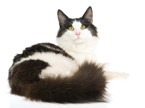 How do I get my cat to use the litter box?
