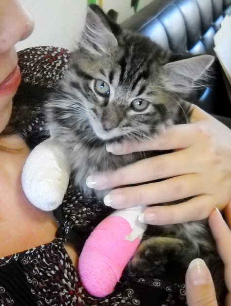 Trusting Kitten Phoenix Purrs Despite His Burns - Life With Cats