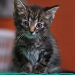 Optimus Kitten Makes Miraculous Recovery