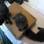 Foster Kittens Get A New Box!