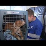 Cats and Dogs Get First Class Treatment on Cross Country Flight