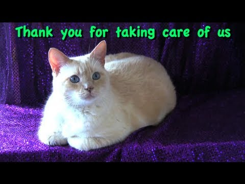 A Cats Prayer of Thanks – Furball Fables
