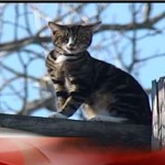 News Crew Gets Help For Scared Cat on Utility Pole
