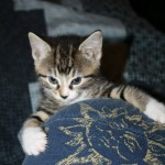 I Adopted a Kitty: Evey, a Story in Pictures