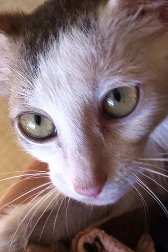 Santito: Injured Kitten Gets Physical Therapy to Walk Again