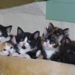Community Shows Generosity After $1k Stolen From Forgotten Felines of Maine