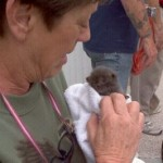 Kitten Rescued From Abraham Lincoln Statue