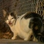 Group Rescues Lost Pets After Sandy