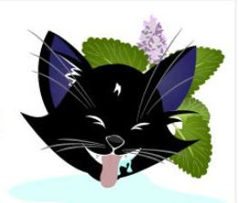 Infographic: A Guide to Understanding Catnip