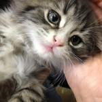 Photos: Farm Kittens