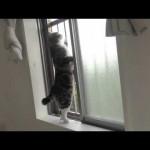 Meow Meow Maru 6