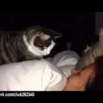 Cat Alarm Clock