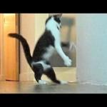 Nutcracker, by Kodi the Cat