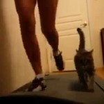 Girl With Her Cat on the Treadmill