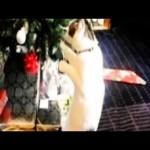 Cat vs. Christmas Tree