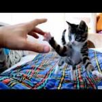 Smile: Cute Kitten Fun