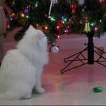 Kitten Attacks Christmas Decorations on Tree