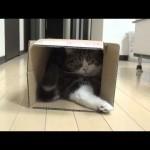 Box and Maru 13