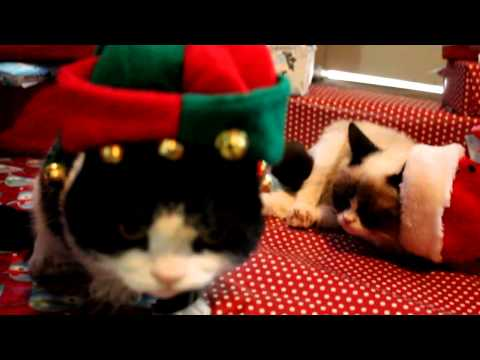 Grumpy Christmas: Grumpy Cat and Pokey on Christmas Day