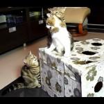 Funny Cats Compilation: Ninja Kittens Blooper Reel
