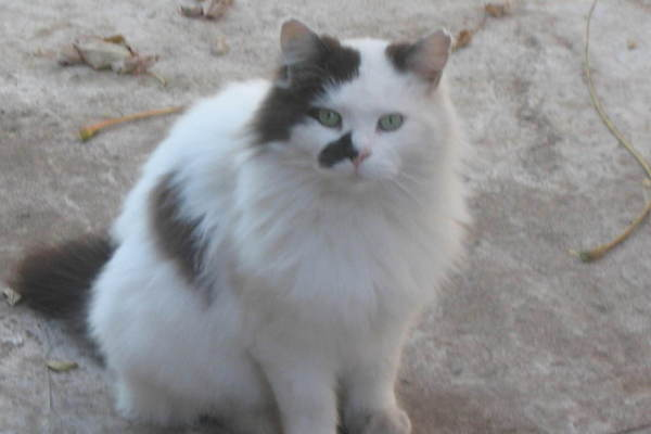 The Panda Project: A Community Cat is Honored in a Campaign to Protect Animals