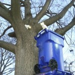 Richmond Police Use Creative Thinking to Rescue Two cats From Tree