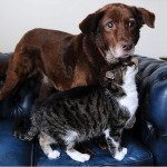 Guide Cat Helps Her Blind Dog Friend