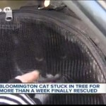 Neighbors Wouldn't Give Up: Mittens Rescued After Days in a Tree